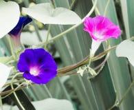 Due fiori del prato Fotografia Stock Libera da Diritti