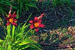 Due fiori rossi in un lato della fine della foto su fotografia stock
