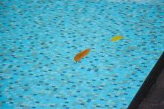 Due foglie che galleggiano vicino nella piscina pulita e moderna riempita al bordo di acqua hanno colorato l'acqua Ciò è un rilas Immagini Stock