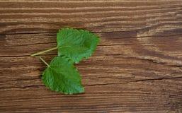 Due foglie di melissa su legno Fotografia Stock Libera da Diritti