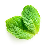 Due foglie di menta fresca isolate su bianco Fotografia Stock Libera da Diritti