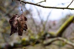 Due foglie su un ramo Immagini Stock