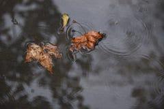 Due foglie in una pozza della pioggia Immagini Stock