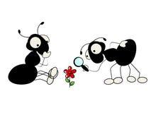 Due formiche e fiori Fotografie Stock