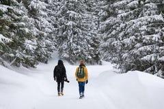 Due fotografi stanno viaggiando in foresta fotografie stock libere da diritti