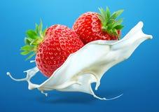Due fragole con la spruzzata del latte isolata su backg blu Immagini Stock Libere da Diritti