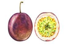 Due frutti della passione maturi isolati su fondo bianco Illustrazione disegnata a mano dell'acquerello dei frutti tropicali esot illustrazione di stock