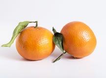 Due frutti delle clementine o dei mandarini Fotografia Stock