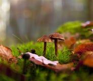 Due funghi Fotografie Stock Libere da Diritti
