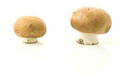 Due funghi. Immagine Stock