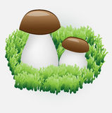 Due funghi Immagine Stock