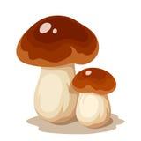Due funghi del porcino Illustrazione di vettore Immagini Stock