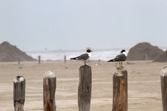 Due gabbiani che si siedono su un pilastro inviano la trascuratezza dell'oceano Fotografie Stock