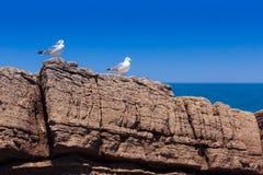Due gabbiani sulla spiaggia rocciosa Immagini Stock