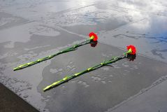 Due garofani rossi messi su una superficie del granito bagnata dopo la pioggia Fotografie Stock