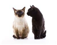 Due gatti Immagine Stock