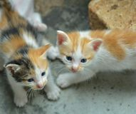Due gatti Immagini Stock Libere da Diritti