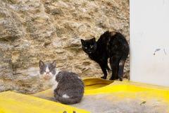 Due gatti aggressivi senza tetto si siedono sui bidoni della spazzatura Immagine Stock Libera da Diritti