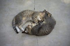 Due gatti che dormono sulla terra, fuoco molle fotografie stock libere da diritti