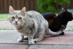 Due gatti curiosi Fotografie Stock Libere da Diritti