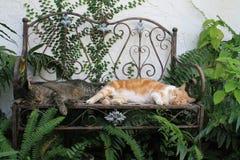 Due gatti domestici che dormono sul benche immagine stock libera da diritti