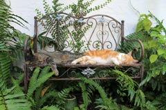 Due gatti domestici che dormono sul benche fotografie stock