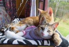 Due gatti nell'amaca Fotografia Stock