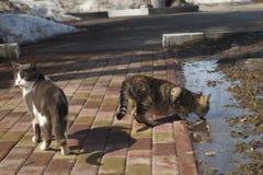 Due gatti nella via Fotografia Stock Libera da Diritti