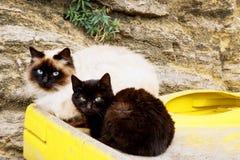 Due gatti senza tetto si siedono sui bidoni della spazzatura Immagine Stock