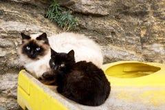 Due gatti senza tetto si siedono sui bidoni della spazzatura Fotografia Stock