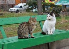 Due gatti si siedono su un banco verde nei gatti grigi e bianchi del parco, fotografia stock
