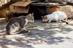 Due gatti smarriti sulla via nel giorno di estate fotografia stock libera da diritti