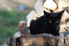 Due gatti su un ceppo Immagini Stock Libere da Diritti