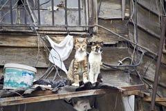 Due gatti sul tetto fotografia stock