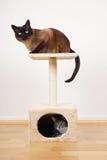 Due gatti sulla torre del gatto Fotografia Stock