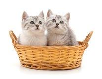 Due gatti in un canestro Fotografia Stock Libera da Diritti