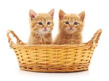 Due gatti in un canestro Immagini Stock