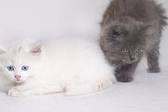 Due gattini immagini stock
