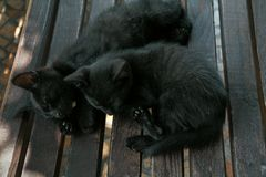 Due gattini abbastanza neri che dormono sul banco nel giorno di estate Immagini Stock Libere da Diritti