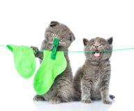 Due gattini che appendono i calzini sulla corda per asciugarsi Isolato su bianco immagini stock