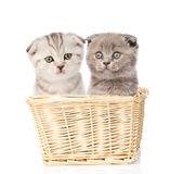 Due gattini che si siedono in un canestro Isolato su priorità bassa bianca Fotografia Stock