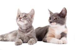 Due gattini che si trovano giù Fotografie Stock