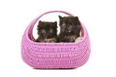 Due gattini della carapace insieme in un canestro rosa Immagine Stock