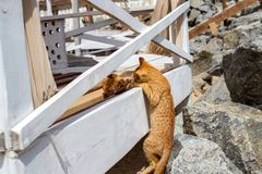 Due gattini gialli che giocano fuori Lotta e gioco di gatto due in pietra fotografie stock