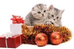 Due gattini grigi con le decorazioni di natale Immagini Stock
