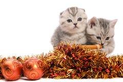 Due gattini grigi con le decorazioni di natale Fotografia Stock