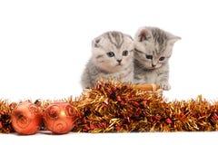 Due gattini grigi con le decorazioni di natale Fotografia Stock Libera da Diritti