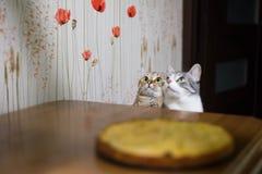 Due gattini si siedono davanti alla tavola immagini stock libere da diritti