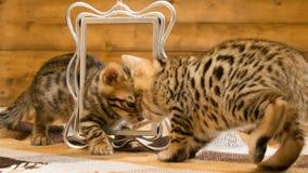 Due gattini stanno giocando sui precedenti della foto Immagine Stock Libera da Diritti