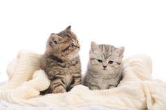 Due gattini a strisce grigi su tessuto tricottato bianco Fotografia Stock
